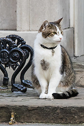 Downing Street, London, February 23rd 2016. Larry, the Downing Street cat sits outside the door of Number 10 while inside the weekly cabinet meeting takes place.  ©Paul Davey<br /> FOR LICENCING CONTACT: Paul Davey +44 (0) 7966 016 296 paul@pauldaveycreative.co.uk