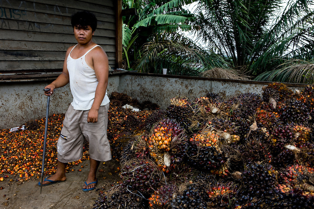 Workers outside Perawang, Sumatra, Indonesia, separate the seeds of the palm trees to be later processed into palm oil, Aug. 31, 2008..Daniel Beltra/Greenpeace