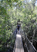 AUSTRALIA - BEDDELUP A general view Karri Trees and a walkway in  Western Australia. 12/01/2010. STEPHEN SIMPSON...