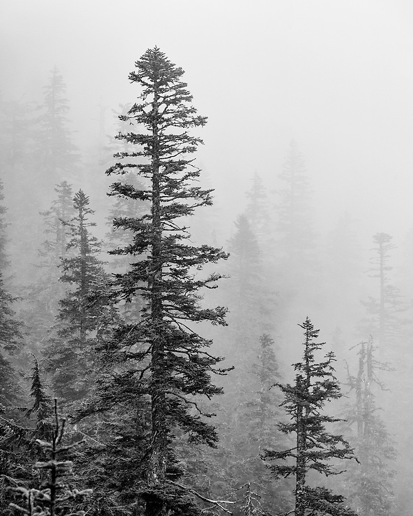 Fog in Mount Hood National Forest