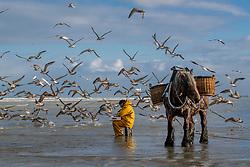 Garnaalvissers Oostduinkerke<br /> © Hippo Foto - Dirk Caremans<br /> 29/11/2019