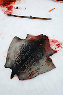 Blood marks and seal fur is strewn across the ice after a dead seal is skinned by Inuit hunters on Resolute Bay, Canada, on Tuesday, June 12, 2007. The Inuit hunt seals for food, and the community uses every part of the seals, either eating the meat or using the hides to make warm clothes. The traditional way of life in the Resolute Bay Inuit community is being threatened by rising temperatures. The dangers of global warming, which have been extensively documented by scientists, are appearing first, with rapid, drastic effects, in the Arctic regions where Inuit people make their home. Inuit communities, such as those living on Resolute Bay, have witnessed a wide variety of changes in their environment. The ice is melting sooner, depleting the seal population and leaving them unable to hunt the animals for as long. Other changes include seeing species of birds and insects (such as cockroaches and mosquitoes) which they have never encountered before. The Inuit actually lack words in their local languages to describe the creatures they have begun to see.
