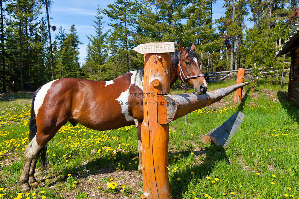 """Bracewells Alpine Wilderness Adventures located in the Chilcotin District of British Columbia. """"The Chilcotin"""" is a plateau and mountain region in British Columbia on the inland lea of the Coast Mountains on the west side of the Fraser River.  The horses that will take us up Potato Mountain are corralled."""