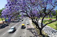 AVENIDA FIGUEROA ALCORTA Y ARBOLES DE JACARANDA FLORECIDOS, BARRIO DE RECOLETA, CIUDAD DE BUENOS AIRES, ARGENTINA (PHOTO © MARCO GUOLI - ALL RIGHTS RESERVED)