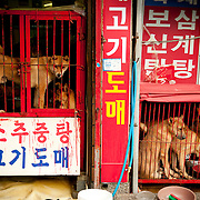 Gaegogi: Dog Meat Markets