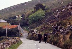 Men walking along a Rural road, Ireland