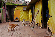 Two rescued dogs roam about the grounds of the Soy Callejerito shelter in Cuzco, Peru.
