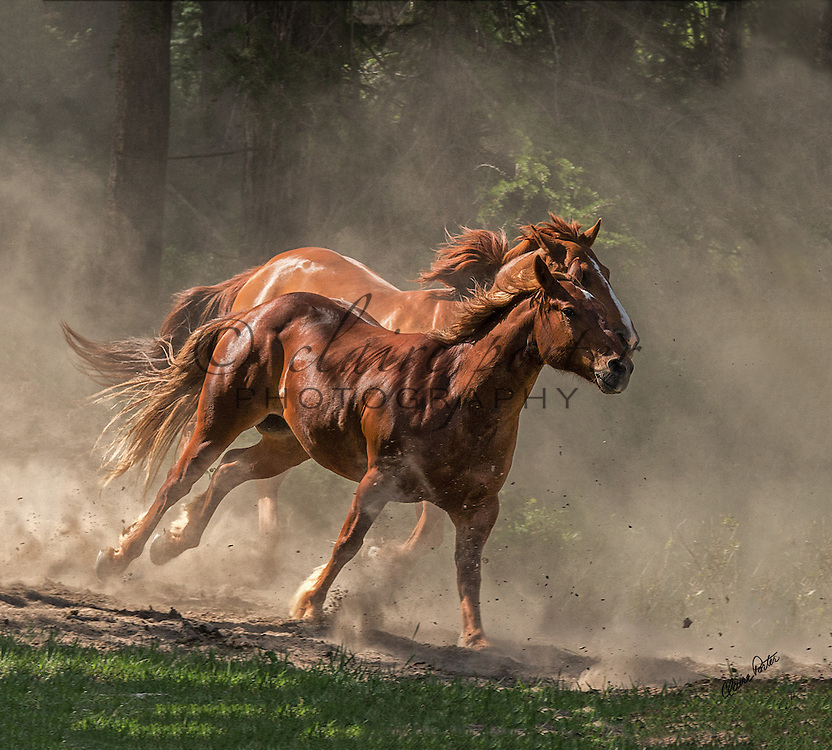 These beautiful horses were photographed at the Three Bars Guest Ranch in Canada. I love how the dust in some of them creates such drama and emotion.<br />