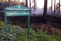 © licensed to London News Pictures. LONDON, UK  03/05/2011. A forest fire continues to burn out of control in Swinley Forest, Bracknell, Berkshire. It started days ago and today up to 22 fire appliances were involved in tackling the blaze. A large area of Swinley forest and Crowthorne Wood have been devastated. Please see special instructions for usage rates. Photo credit should read CLIFF HIDE/LNP