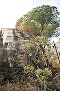 Fire hazard in an urban surrounding. Burnt forest trees near apartment buildings. Photographed in Haifa, Israel