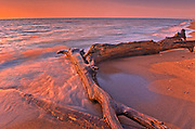Driftwood on Lake Erie shoreline at sunrise<br />Point Pelee National Park<br />Ontario<br />Canada