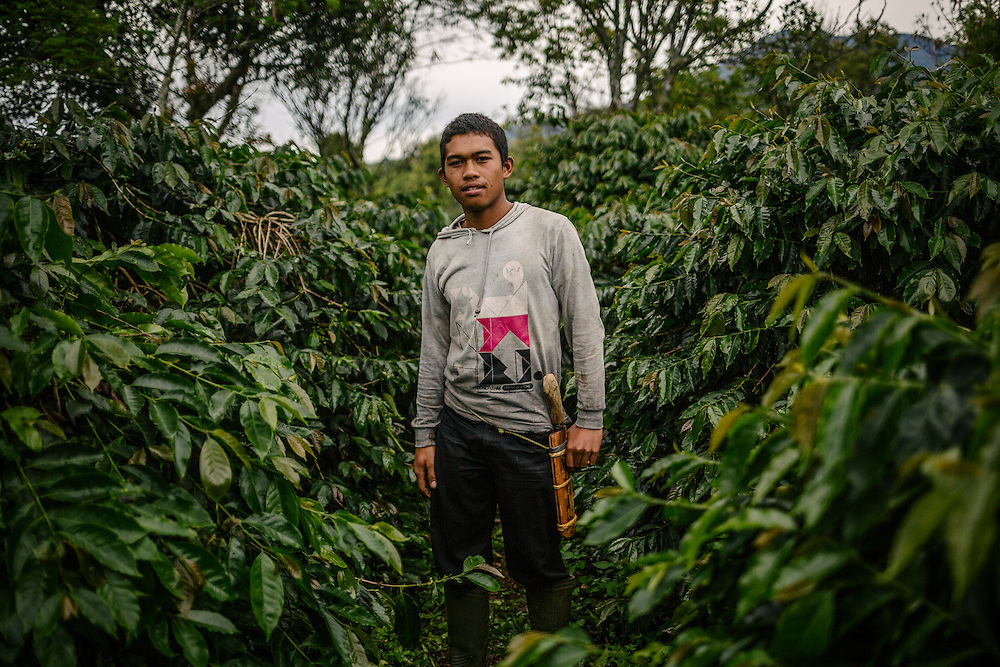 Mr. Juri, son of a coffee farmer, stands amongst his coffee plants. Farmers tend to work on smallareas of land in this region,