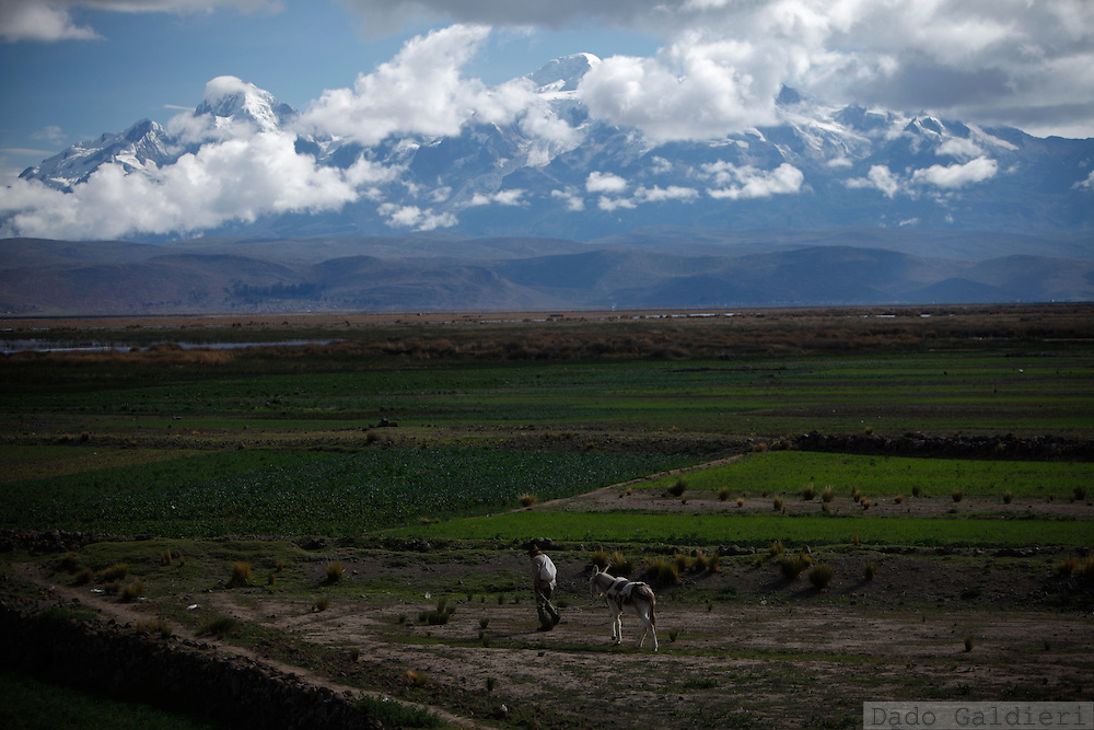 An indigenous farmer pushes his donkey towards his vegetables' crop fields in Santiago de Huata, north of La Paz, Friday, Dec. 18, 2009.  Climate change could alter the rain patterns that help keep the ice cap of snowy peaks stable, delivering a steady flow of water to dependent farming villages nearby, according to Edson Ramirez, chief glaciologist at Bolivia's UMSA university.  Meanwhile in Copenhagen, world leaders try to reach a global agreement to combat global warming.