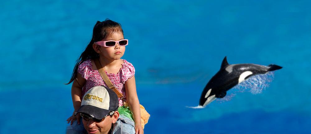 (M) Shamu show, Killer Whale, Orca (Orcinus orca), Sea World, San Diego, California, United States of America