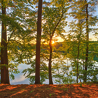 Sunset at Walden Pond in Concord showing a magical mixture of trees and orange hues. I was on my way to the Minute Man National Historic Park when I realized that there might be spectacular sunset light to be photographed. I quickly pulled over, made my way to the banks of this famous pond that Thoreau ones called home, and took a few photographs. <br />