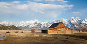 Bison pass by Mormon Row Barn in Grand Teton National Park