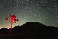 Light Painting in Joshua Tree National Park Under Night Sky, California