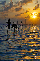 """Impressive Fishermen who sit uncomfortably for hours on small poles stuck into the water a few meters offshore and fish for small reef fish called 'Bollu'. It took me days to locate this actively used site. A sad fact that the few men who still fish make more income from tourists for photos than they do from fishing. The biggest threat faced by these enduring men are the large scale trawling boats that capture the little fish in the hundreds and thousands in one go with their nets."""