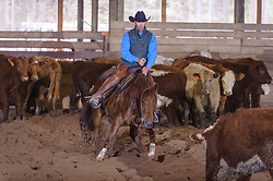 April 29 2017 - Minshall Farm Cutting 1, held at Minshall Farms, Hillsburgh Ontario. The event was put on by the Ontario Cutting Horse Association. Riding in the Open Class is Troy Donaldson on Missancattin owned by Katie Leung.
