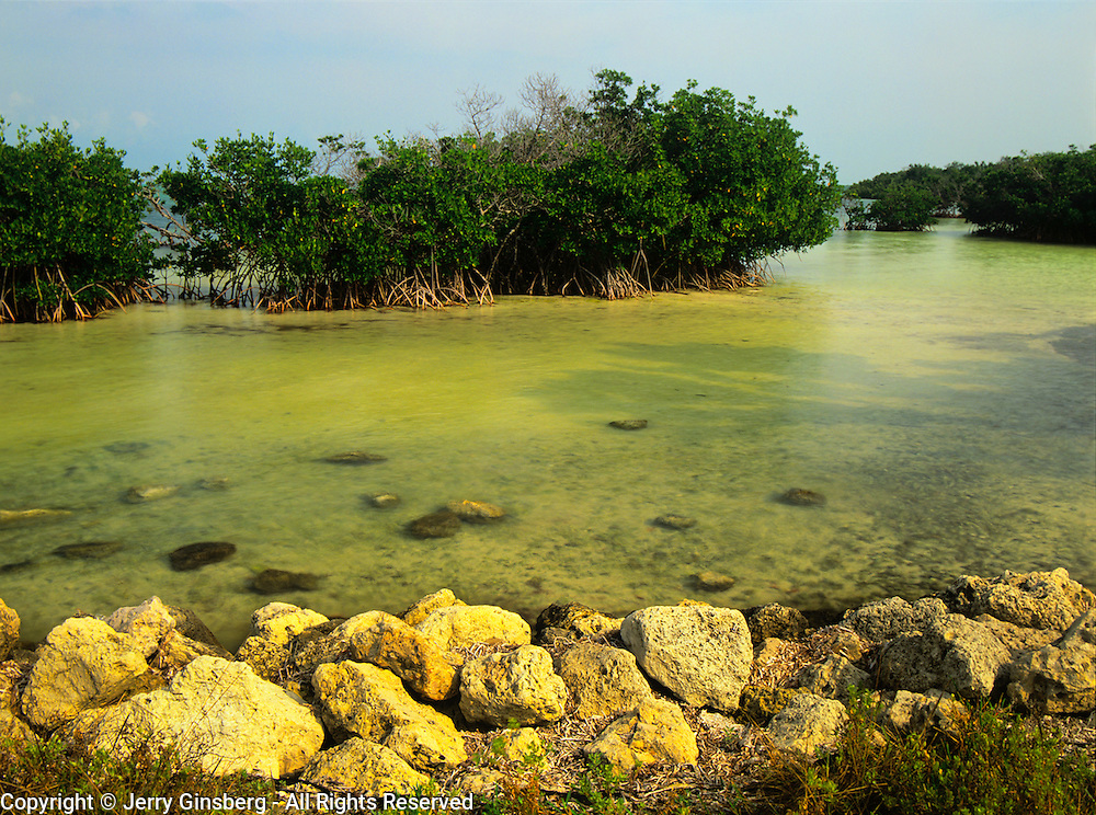 Mangroves on Elliott Key, Biscayne National Park, Miami, FL.