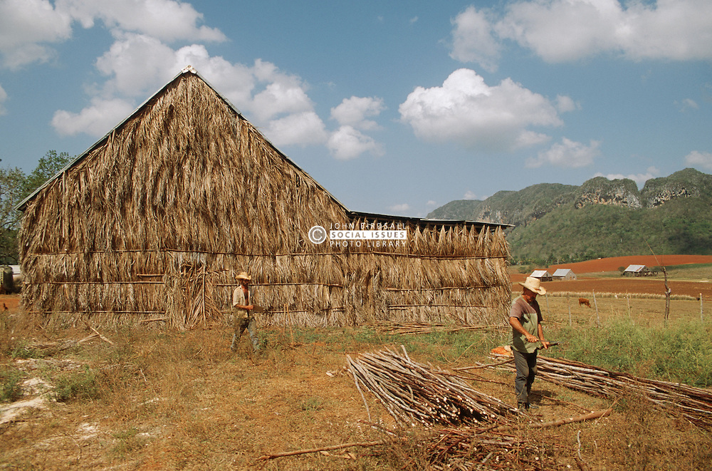 Men working on farm near Vinales; Pinar Province; Cuba; with thatched tobaccodrying barn in background,