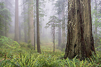 Early morning fog added a delicate sense of aesthetics to<br />