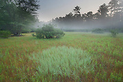 Dry vernal pool; summer; NJ, Pine Barrens
