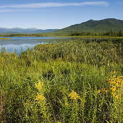 Big Cherry Pond and the Presidential Range in Jefferson, New Hampshire.  Pondicherry National Wildlife Refuge.  White Mountains.  Summer.  Black-eyed susans.