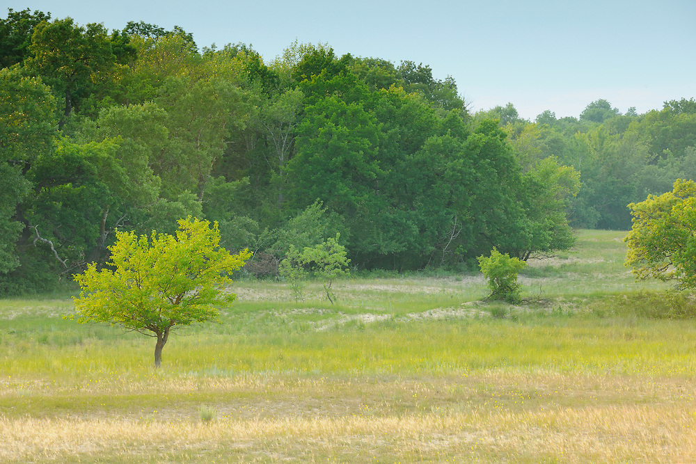 Ancient grazing landscape, Letea forest, Strictly protected nature reserve, Danube delta rewilding area, Romania