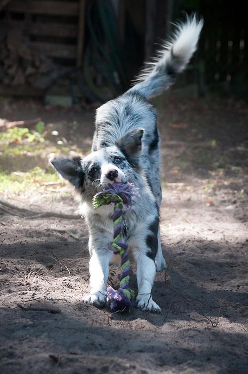 Belle & Roo
