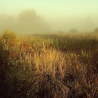 A golden scene across a grassy meadow
