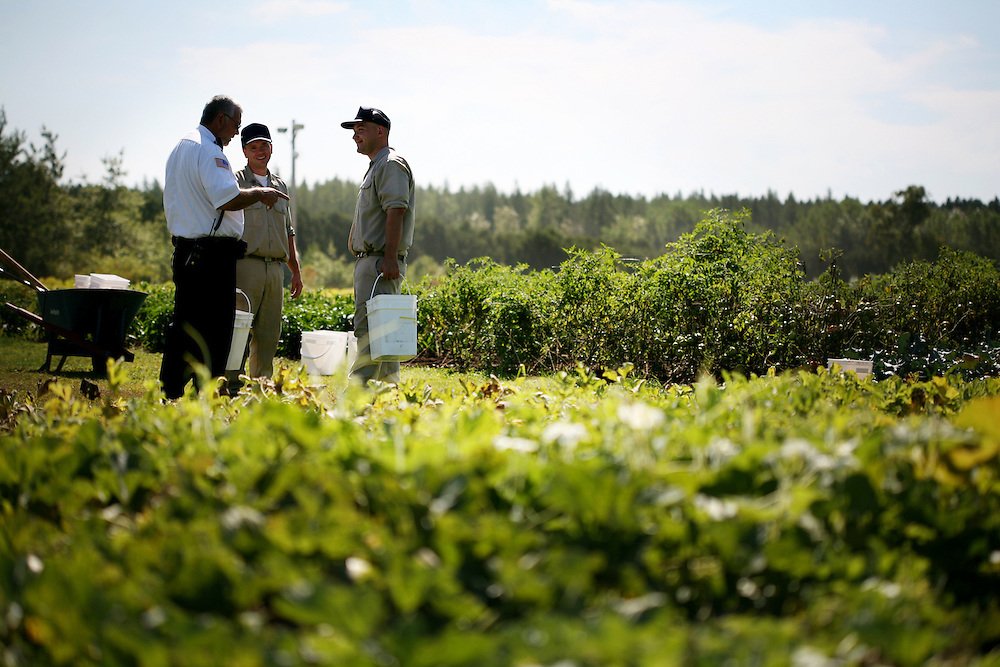Inmates Leroy LaCrosse, center, and Jason Forcier, right, talk with a supervising officer as they harvest vegetables in the garden at the Minnesota Correctional Facility in Willow River August 22, 2012.