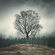 Trees by Loch Chon, the Trossachs