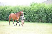 10 - Class 10 - Inhand Riding Horse Hunter Type