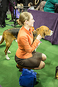 New York, NY - 16 February 2016. A contestant in the Junior Division and her dog prior to entering the ring at the 140th Westminster Kennel Club Dog show in Madison Square Garden.