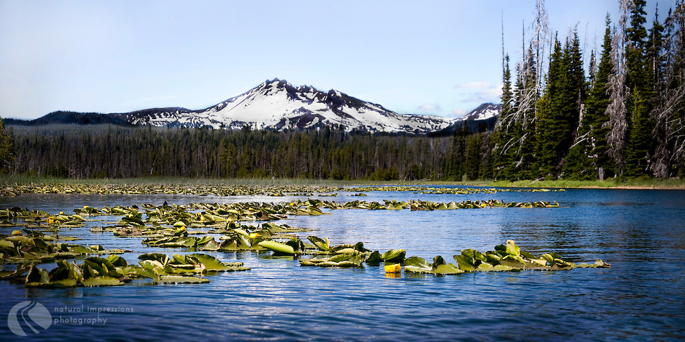 Three Fingered Jack and Mt. Bachelor sit at opposite ends of Hosmer Lake, located off the Cascade Lakes Highway near Bend, Oregon.  A perfect lake for canoeing, Hosmer appears as two lakes connected by a narrow channel that affords a magnified glimpse of huge fish and reeds teaming with water fowl.