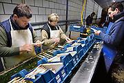 Nederland, Huissen, 20-4-2008Poolse werknemers, arbeidskrachten, personeel, uitzendkrachten maken asperges klaar voor levering aan een klant.  Arbeidsmigratie uit Polen, tijdelijke werkvergunning, werkgelegenheid, arbeidsethos. personeelstekort werkloosheid, CWI.Vaak worden zij geworven door een uitzendbureau, uitzendburo, in Polen zelf.Foto: Flip Franssen/Hollandse Hoogte