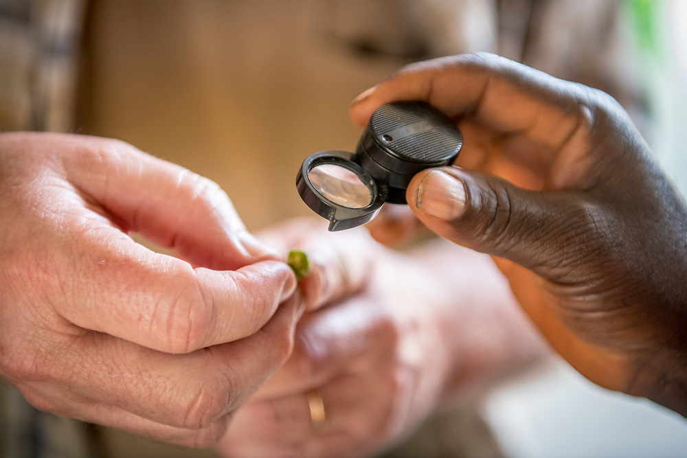 Close up of hands examining a flower through a magnifying glass in Ganta, Liberia