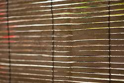 Wood Blinds, Full Frame
