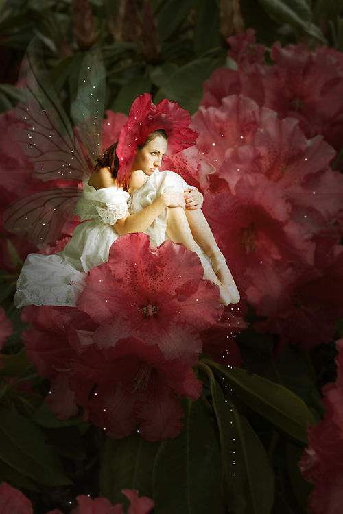fairy sitting on a flower