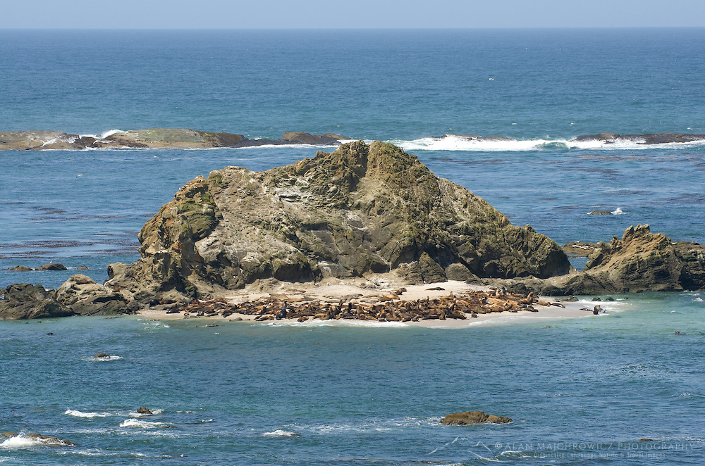 Shell Island at Shore Acres State Park, Oregon. The island is a popular haul out for seas lions and other mareine mammals.