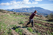 A guestworker from Albania is working on the fields with the White Mountains (Lefka Ori) in the back seen from Maza, a mountain village located close to Palaiochora which is a small town in Chania regional unit on the island of Crete, Greece. A guestworker from Albania is working on the fields with the White Mountains (Lefka Ori) in the back seen from Maza, a mountain village located close to Palaiochora which is a small town in Chania regional unit on the island of Crete, Greece.