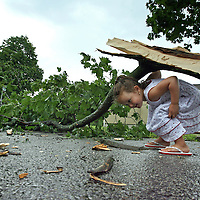(07/01/08-Watertown,MA) Amanda Cosco, age 3 years, plays in front of her home under one of several trees that were damaged during a severe thunderstorm.