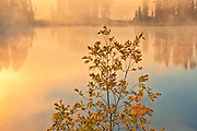 Morning fog on Isabel Lake<br />