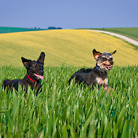 Images of Boo and Chewy at Sheepcote Valley, Brighton.