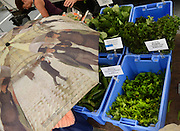Belmont, MA 062713  At the Farmer's Market in Belmont on June 27, 2013 mixed produce from Kimball Farms.  (Essdras M Surez/ Globe Staff)/ G