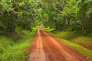 Dirt road through the Budongo Forest in Murchison Falls National Park in Uganda.