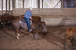 April 29 2017 - Minshall Farm Cutting 1, held at Minshall Farms, Hillsburgh Ontario. The event was put on by the Ontario Cutting Horse Association. Riding in the 1,000 Amateur<br />  Class is James Cook on Duals Peps Tom Cat owned by the rider.