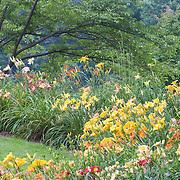 Meadowlark Gardens, Virginia.