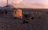 Mongolia. cattle breede ,  Gobi desert / troupeaux et éleveurs Gobi desert